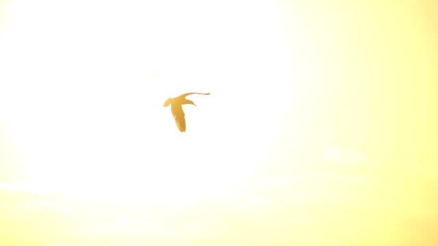 Möwen bei Sonnenuntergang
