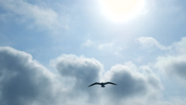 Seagulls Flying over the sun and Blue Sky