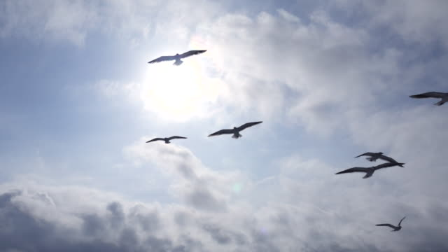 seagulls flying over the sun and blue sky - uccello video stock e b–roll