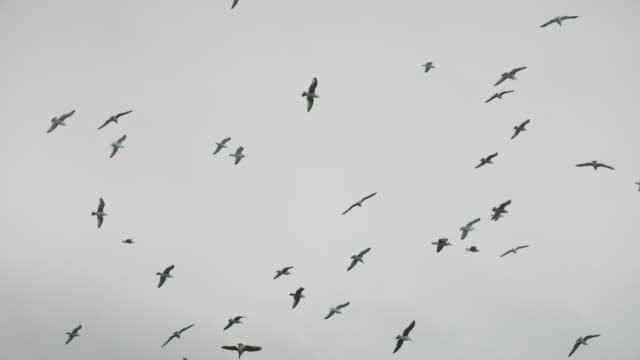 seagulls flying - flock of birds stock videos & royalty-free footage