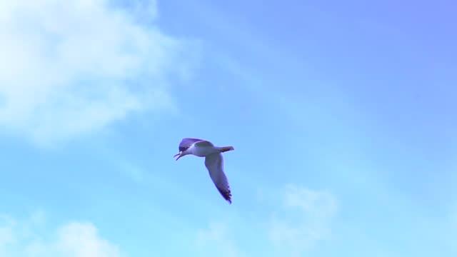 stockvideo's en b-roll-footage met seagulls flying - silvestre