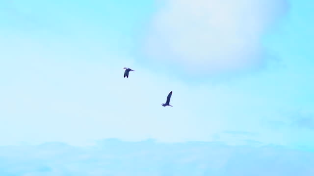 seagulls flying - two animals stock videos & royalty-free footage
