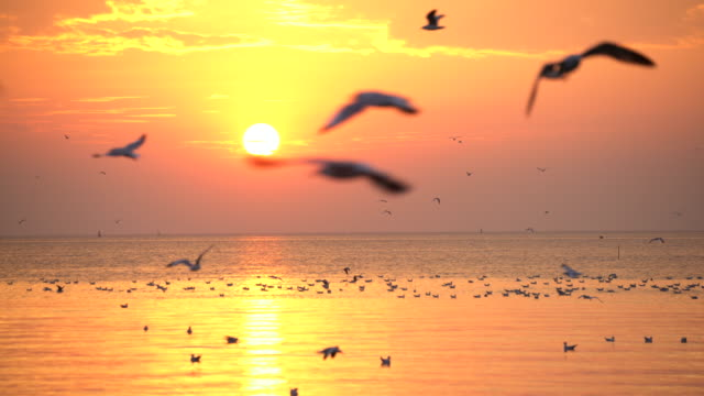 Seagulls flying with Sunset