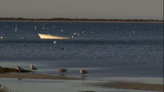 seagulls forage along a beach where a small boat moors just offshore. - möwe stock-videos und b-roll-filmmaterial