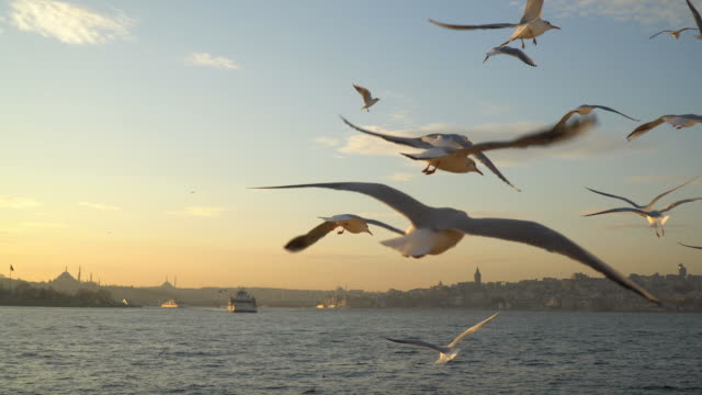 seagulls from ferry - istanbul stock videos & royalty-free footage