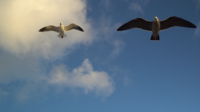 seagulls gliding overhead in beautiful blue sky with clouds - seagull stock videos & royalty-free footage