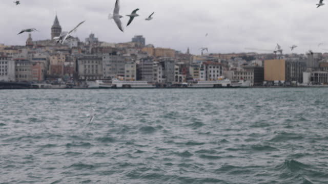 seagulls in bosphorus, istanbul, turkey - bosphorus stock videos & royalty-free footage