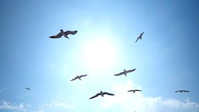 vídeos y material grabado en eventos de stock de gaviotas en vuelo - gaviota