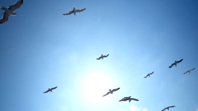 seagulls in flight - flapping wings stock videos & royalty-free footage