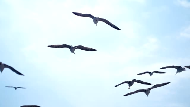 seagulls in flight - flock of birds stock videos & royalty-free footage