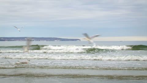 möwen im flug - nordsee stock-videos und b-roll-filmmaterial