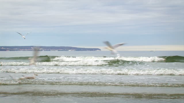 seagulls in flight - north sea stock videos & royalty-free footage