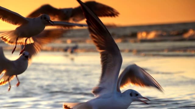 stockvideo's en b-roll-footage met seagulls in flight - meeuw