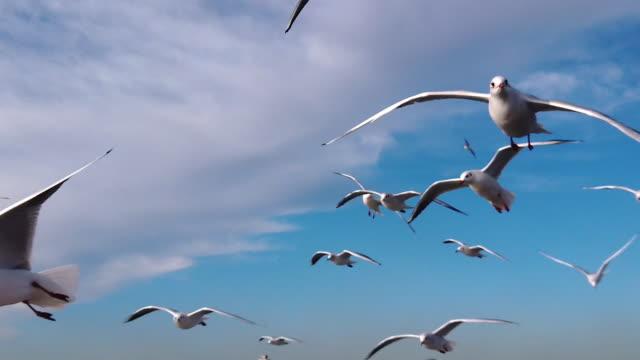 スローモーション、イスタンブール、トルコでカモメ - カモメ科点の映像素材/bロール