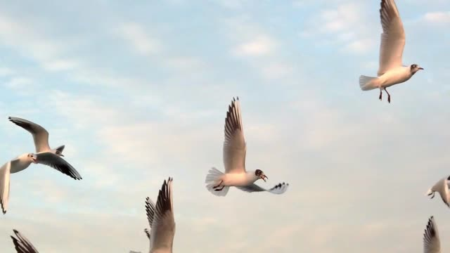 seagulls in slow motion, istanbul,turkey - bosphorus stock videos & royalty-free footage