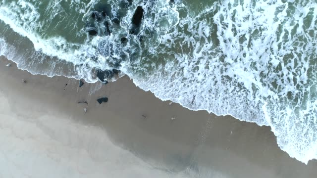 seagulls in surf along water's edge - shallow stock videos & royalty-free footage