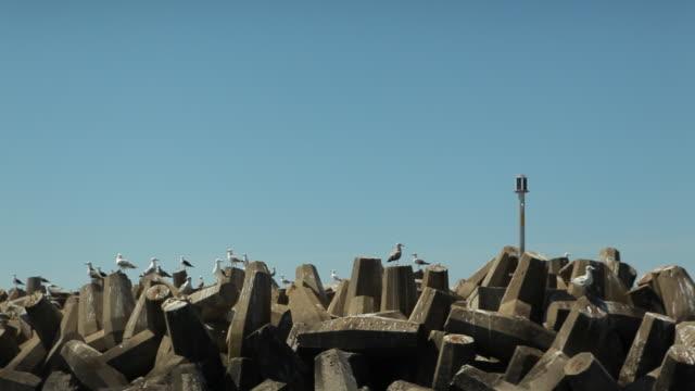 vídeos de stock, filmes e b-roll de seagulls near the sea - quebra mar