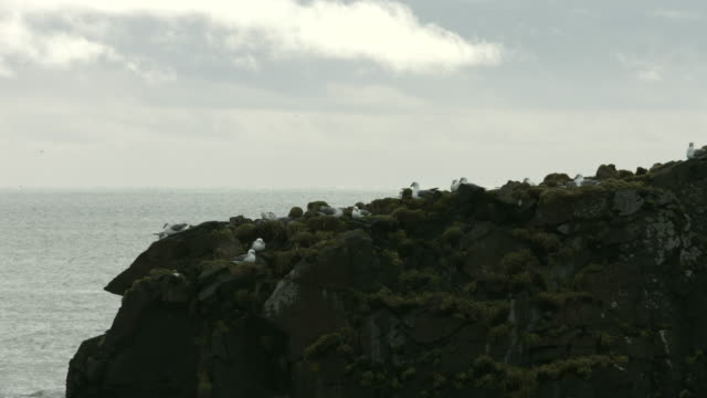 seagulls nest on a rock stack in southern iceland.  - stack rock stock videos and b-roll footage