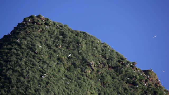 hd gabbiani nido su roccia - costa dell'oregon video stock e b–roll