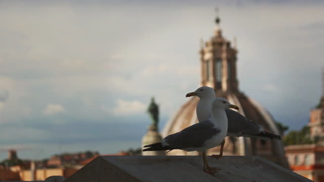 stockvideo's en b-roll-footage met seagulls of rome and church domes - scherpte verlegging