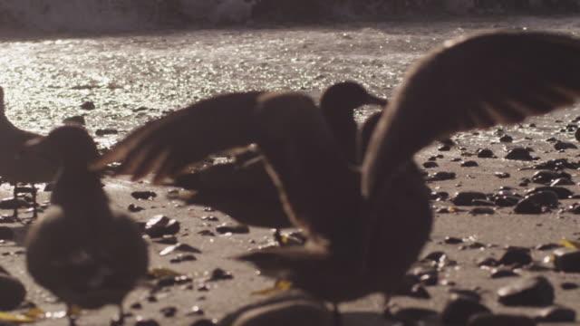 vídeos y material grabado en eventos de stock de seagulls on beach as tide rolls in, slow motion - cuatro animales