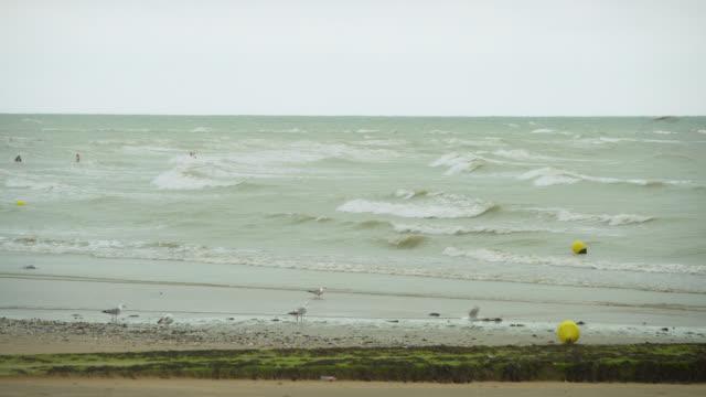 seagulls on beach on overcast day - kent england bildbanksvideor och videomaterial från bakom kulisserna