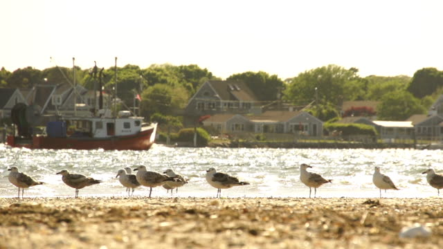 seagulls on beach with boat in background - pier 39 san francisco stock videos & royalty-free footage