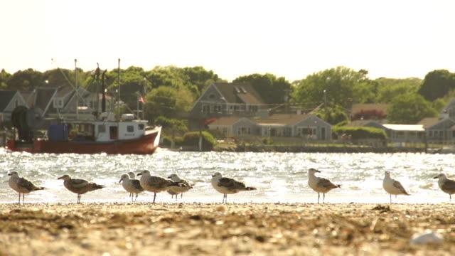 バック グラウンドでのボートとビーチでのカモメ - 海洋性の鳥点の映像素材/bロール