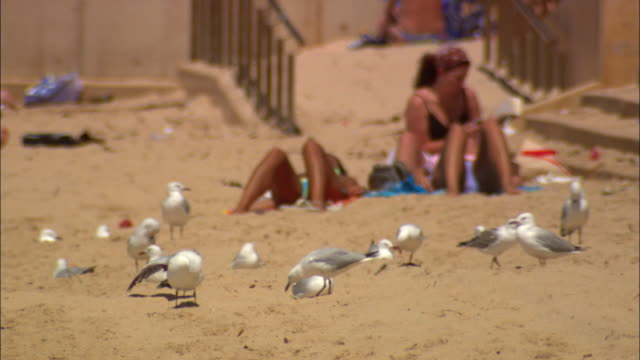 ms selective focus seagulls on beach with people sunbathing in background, sydney, new south wales, australia - sunbathing stock videos & royalty-free footage