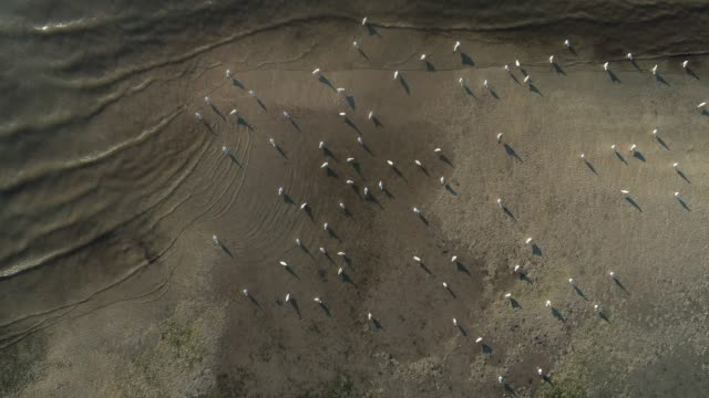 seagulls on coastline from directly above - water bird video stock e b–roll