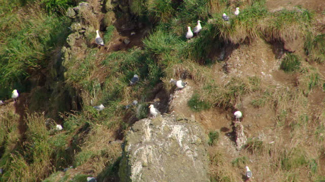 ms aerial seagulls on haystack rock / oregon, united states - haystack rock stock videos & royalty-free footage