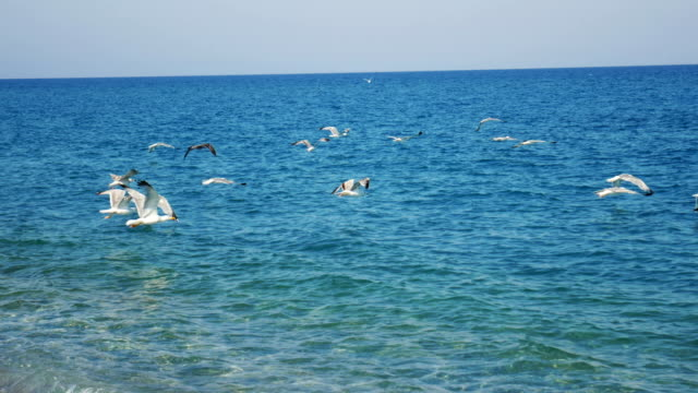 stockvideo's en b-roll-footage met meeuwen op rhodos eiland, griekenland - rodos dodecanese eilanden