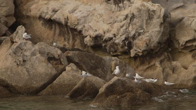 Seagulls on rocks New Zeland