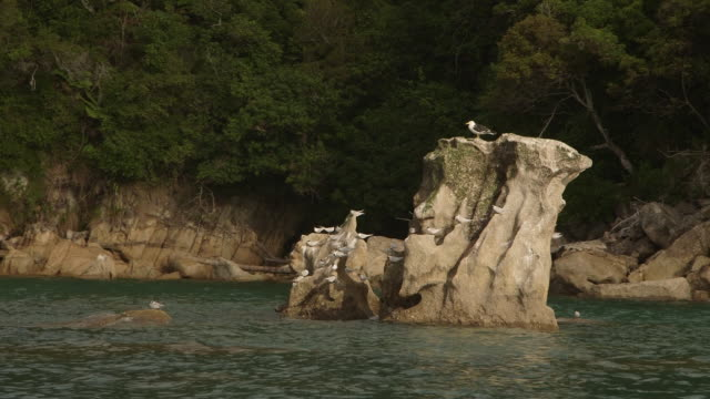 seagulls on rocks scenic new zealand coastline - seascape stock videos & royalty-free footage