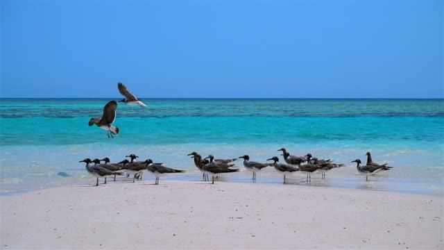 seagulls on sandbar on red sea - marsa alam - egypt - red sea stock videos & royalty-free footage