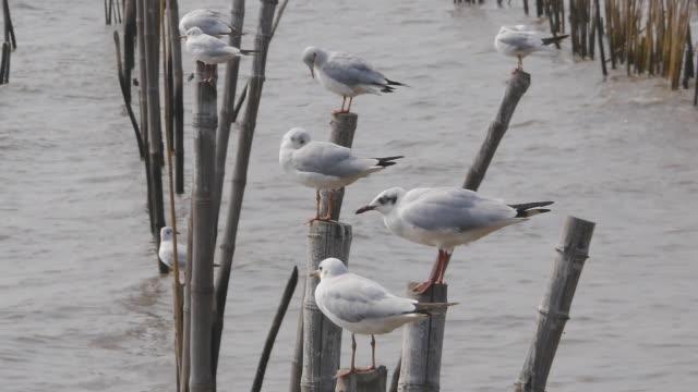 seagulls on seashore - medium group of animals stock videos & royalty-free footage
