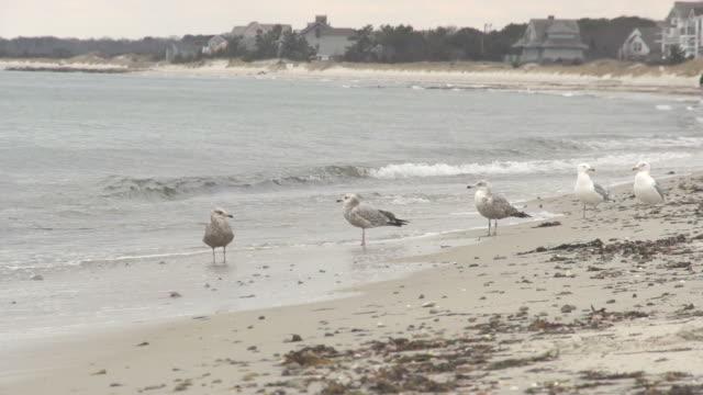 seagulls on the beach - marram grass stock videos & royalty-free footage