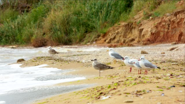 Seagulls on the hilly coast of the sea