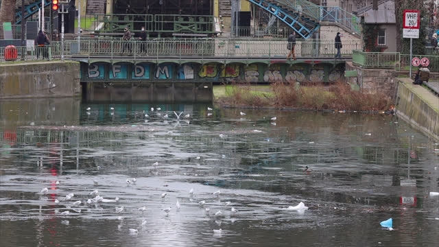 seagulls on the partially frozen saint martin canal in paris - water pollution stock videos & royalty-free footage