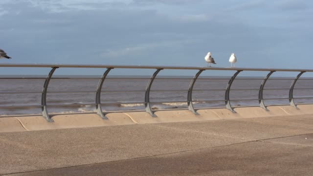 seagulls on the railing next to the sea on september 29 in manchester england - water bird stock videos & royalty-free footage