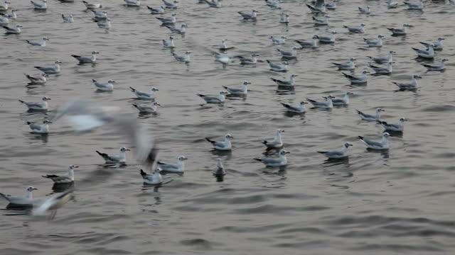 stockvideo's en b-roll-footage met vdo seagulls on the sea - dierlijke mond
