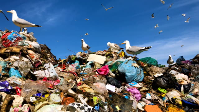 seagulls pick through waste as it is delivered by trucks to the sile integrated waste facility center on march 12, 2018 in istanbul, turkey.... - landfill stock videos & royalty-free footage