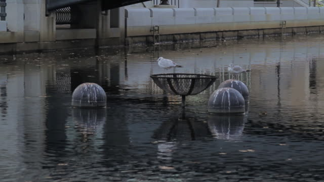 ha seagulls resting on floating objects in canal / providence, rhode island, united states - small group of objects stock videos & royalty-free footage
