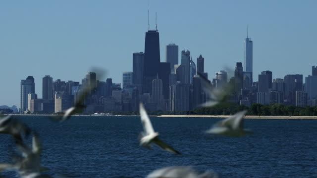 stockvideo's en b-roll-footage met seagulls scatter in front of the chicago skyline - het middenwesten van de verenigde staten