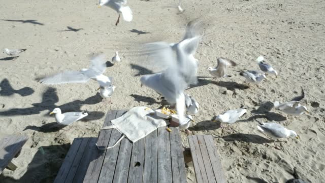 seagulls scavenging food - seagull stock videos & royalty-free footage