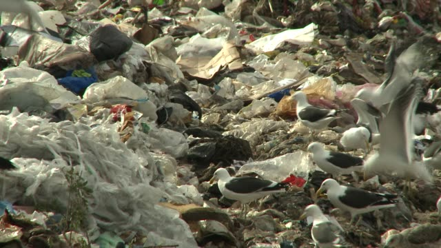 Seagulls swarm above piles of garbage at a landfill in South Africa. Available in HD.