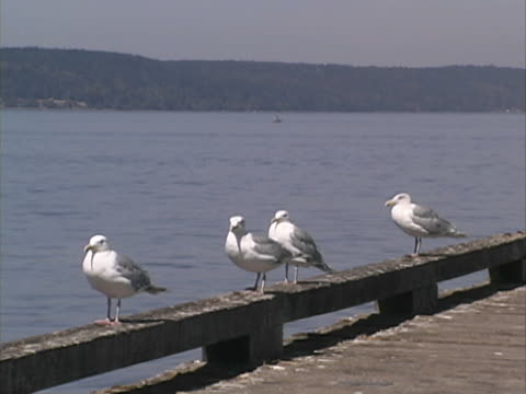 seagulls #1 - puget sound stock videos & royalty-free footage