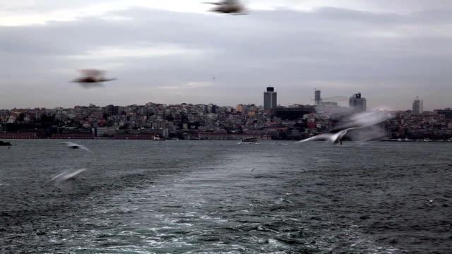 vídeos de stock, filmes e b-roll de gaivotas  - boca animal