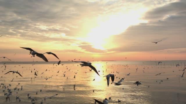 vídeos de stock, filmes e b-roll de gaivotas com pôr do sol - bando de pássaros