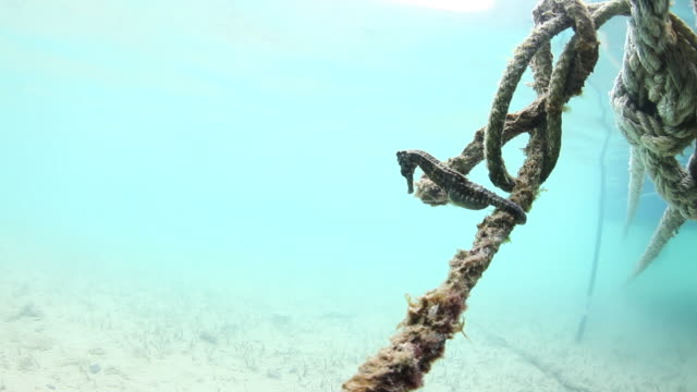 pov, seahorse on boat rope in bermuda - pipefish stock videos & royalty-free footage